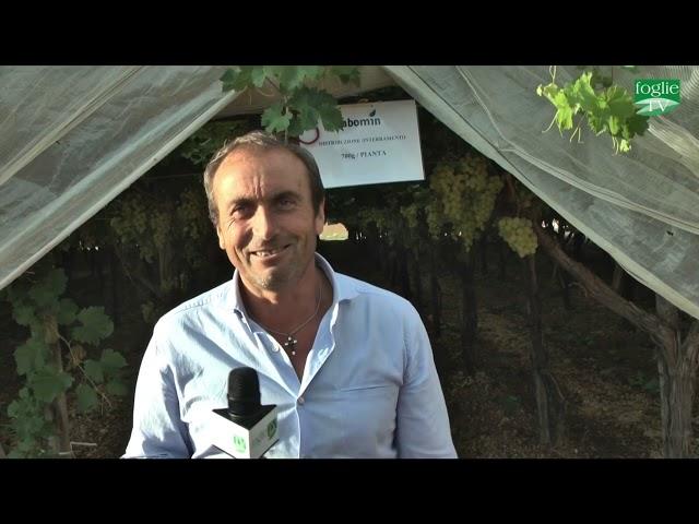 Presentazione Abomin in campo - Dr. Filì, Az.Agr.Mazzone, Nitron, Doctor Farmer, AgriService, Foglie