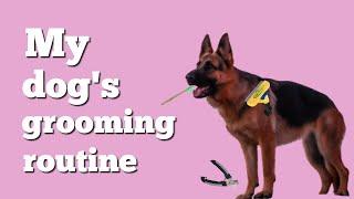 Grooming dogs | Grooming our German Shepherd