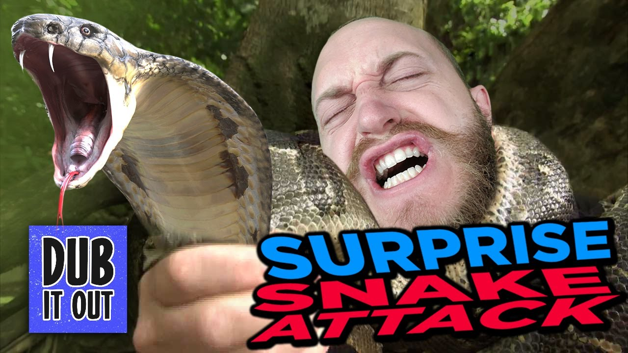 Surprise Snake ATTACK - Dub It Out