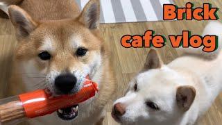 Brick cafe vlog : 카페브이로그인지 시바견…