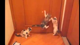 Silly Kittens! Глупые котята!