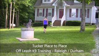 "8yo Mini Schnauzer ""tucker"" Before And After Video - Raleigh Durham Dogtraining"