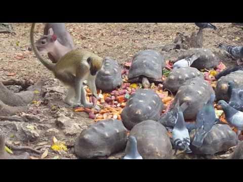 Wildlife Preserve Barbados