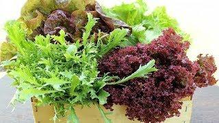 287. Как посеять салат. Проверенные способы, разные варианты