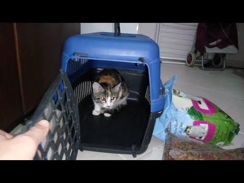 Yeni Kedimiz Cindy Nin Evimize İlk Gelişi