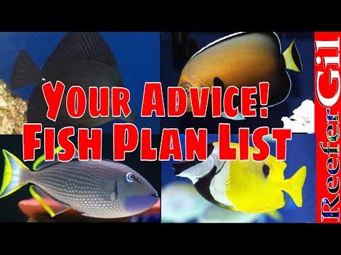 Build Series|Eps. 22| Saltwater Aquarium Fish Selection