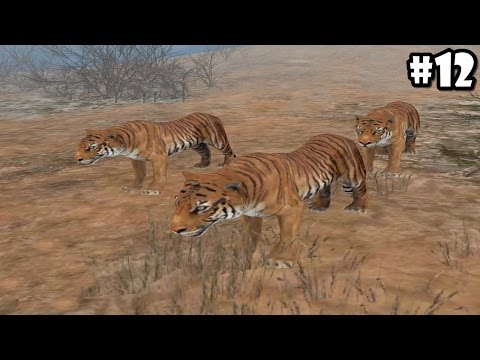 Wild Animals Online - Pack of Tigers - Android/iOS - Gameplay Episode 12