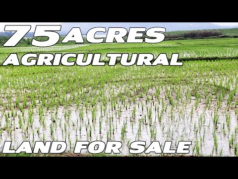 75 ACRES AGRICULTURAL LAND FOR SALE | AT RAYAVARAM IN EAST GODAVARI DISTRICT | PROPERTY PROMOTION TV