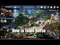Black Desert Mobile How to Tame Horse