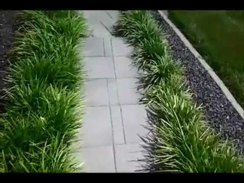Pruning Liriope Part Ii Youtube