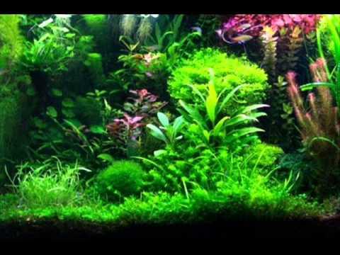 Planten aquarium inrichten
