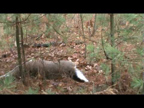 My favorite video of all time!  Deer Hunting Wisconsin