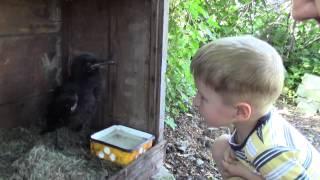 这个你没见过 Crow and a baby.  Воронёнок и ребёнок