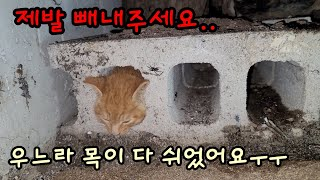A baby cat trapped in a brick hole was rescued[Cat detective]