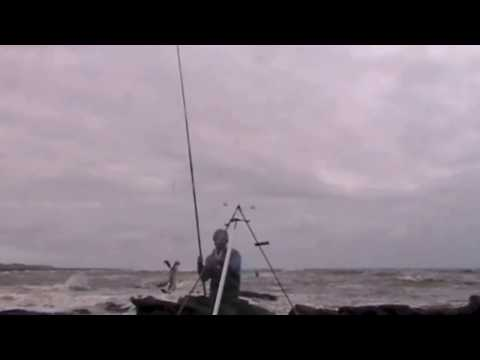 Start Of The Cod Winter Season- Arbroath