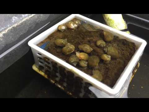 Snails Cleaning My Aquaponic System