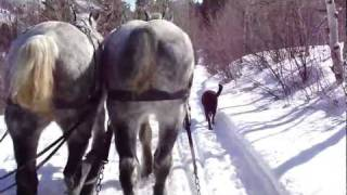 Aspen Horse Drawn Sleigh Ride