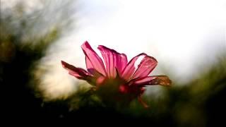 """Grieg - Violin Sonata n°3 - """"Allegretto espressivo alla Romanza"""""""