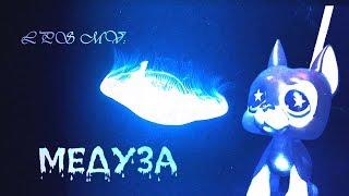 LPS MV: MATRANG - Медуза