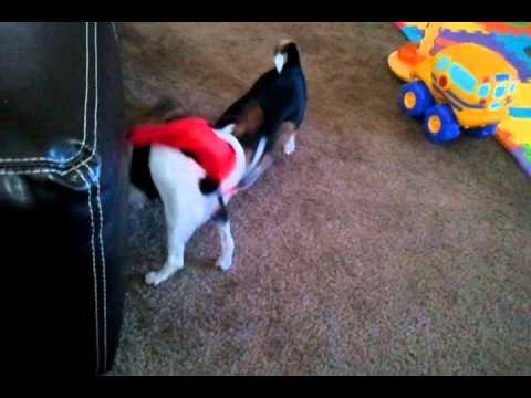 video - 2011-10-11-14-27-25.mp4