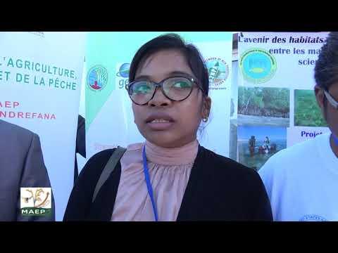 Lancement atelier mangroves à Tuléar