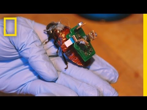 """BioBot"" Roaches Could Save Lives With Tiny Backpacks 
