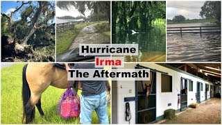 Hurricane Irma: The Aftermath   ARE THE HORSES OK?