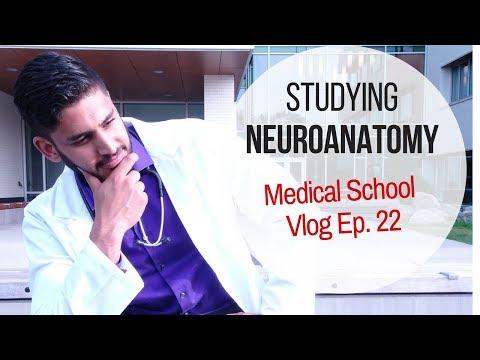 Studying Neuroanatomy | Medical School Vlog Ep 22