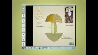 Примеры использования электронных образовательных ресурсов ЭОР на уроках биологии