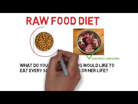 Two reasons to switch your dog to a raw food diet