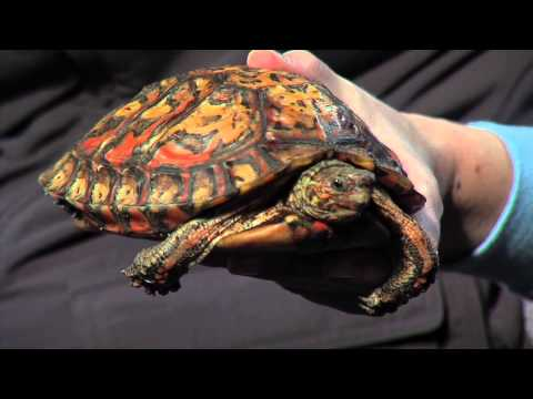 Wildlife Wednesday with the Oakland Zoo- Wood Turtle