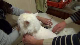 Немного позитива стрижка мою кошку Мусю