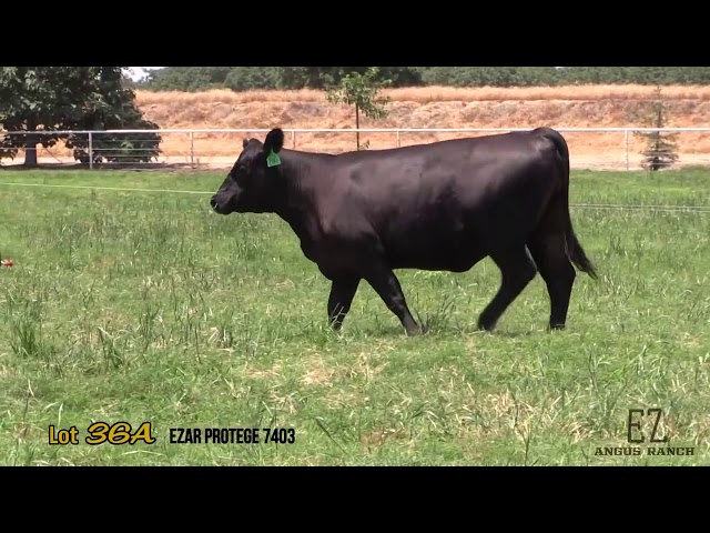 EZ Angus Ranch Lot 36A