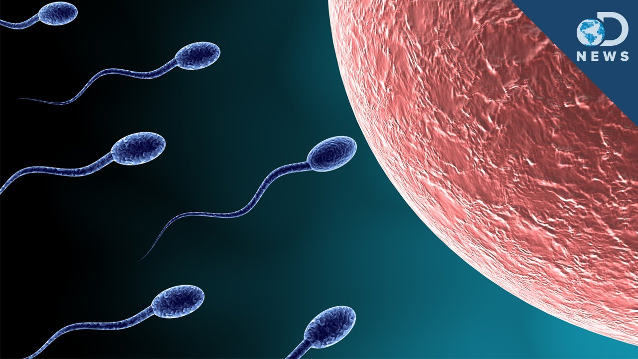 A picture of a sperm