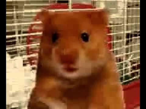 otaku-nude-hamster-naked-ladies-fake-nudes