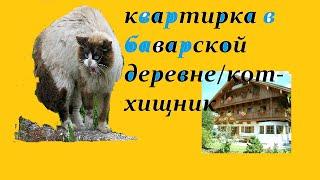 квартирка в баварской деревне/экскурсия по квартире/кот-хищник