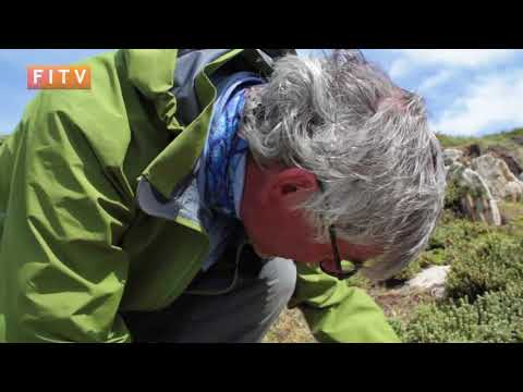 Studying the Falklands Fritillary Butterfly