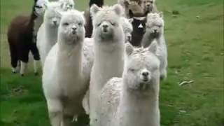 Забавно видео: Top 10 Cute And Funny Animals
