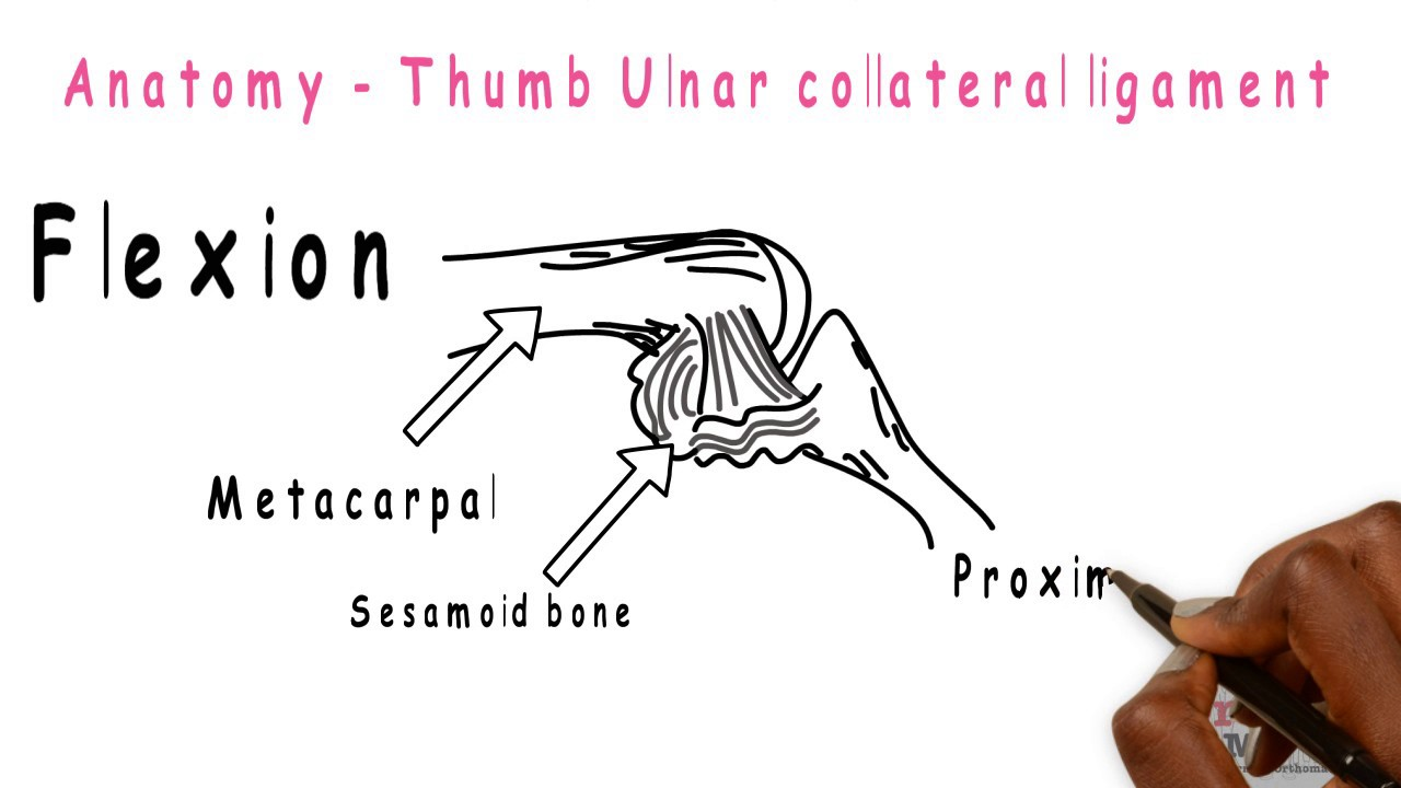 Basic Sciences - Thumb ulnar collateral ligament - YouTube