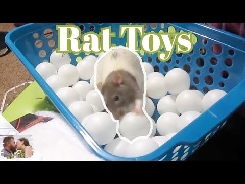 Dollar Store Rat Toys & Cage Accessories!