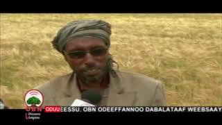 Oomisha Shawaa kaabaa 9 3 2012