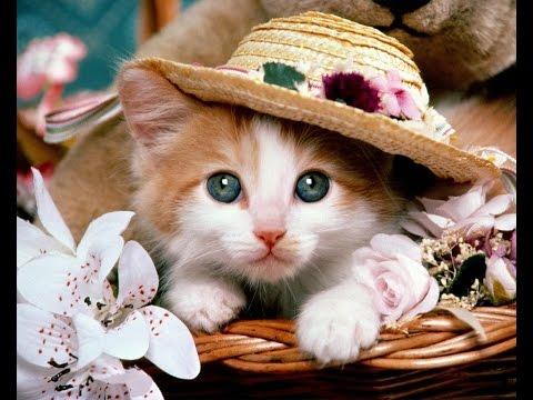 【こどもの日特集】明日こどもの日だから色々動物の子供の画像貼る【後編】