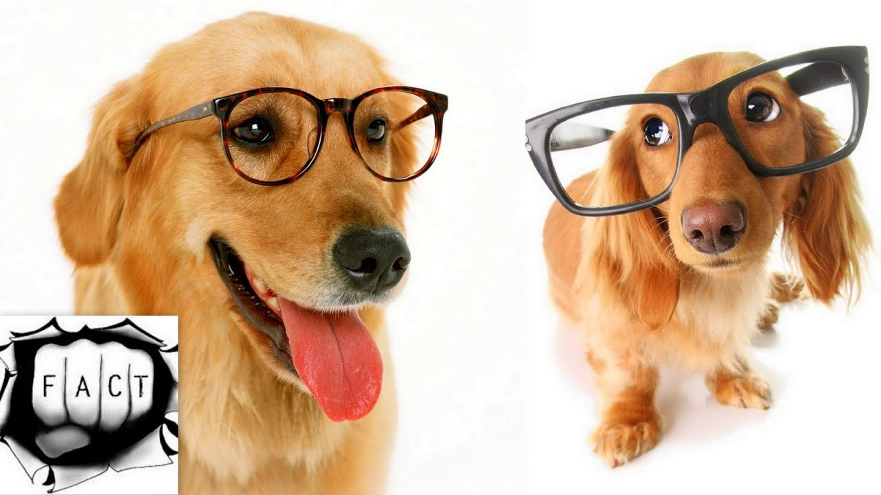 Top 10 Most Intelligent Animals In The World