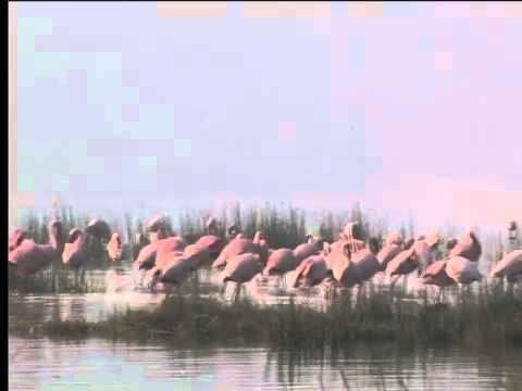 Flamingoes at Lake Nakuru, Kenya 2010