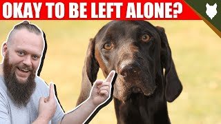 Can My GERMAN SHORTHAIRED POINTER Be Left Alone