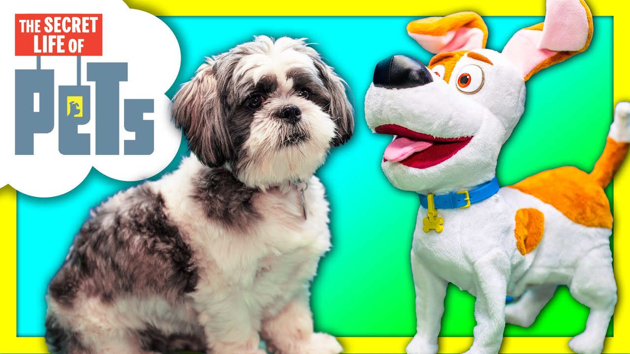 ASSISTANT With Secret Life of Pets Max Meets Wiggles Funny Live