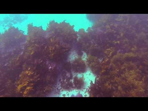 Cuttlefish in Manly - Sydney's Underwater Vivid Festivle