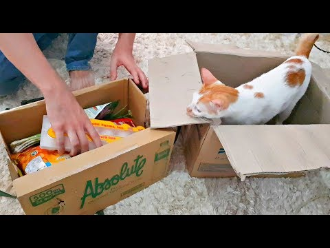 MY CAT is in love with BOXES! | CAT AND BOXES  📦🐈