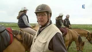 La Baie de Somme en habits d'été : Le Henson, petit cheval baie de la Baie