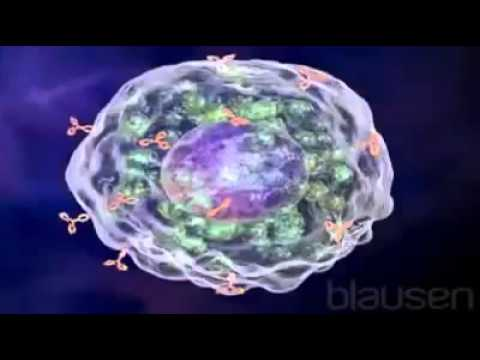Allergic Reaction Animation – Allergy Physiology symptoms, treatment, medicine
